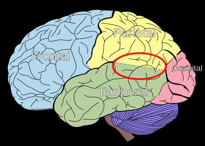 Temporo-parietal_junction